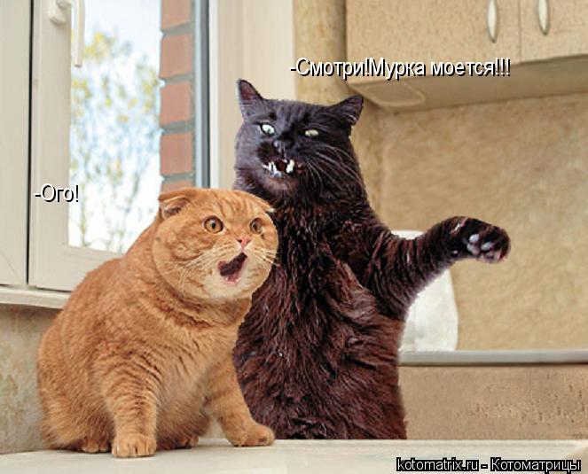 Котоматрица: -Смотри!Мурка моется!!! -Ого!