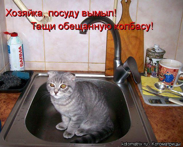 Котоматрица: Хозяйка, посуду вымыл! Тащи обещанную колбасу!