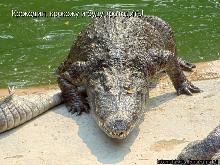 Котоматрица: Крокодил, крокожу и буду крокодить!