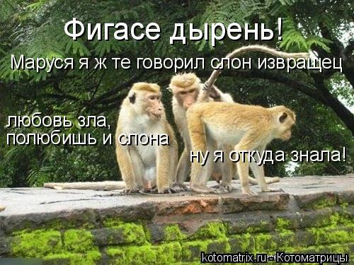 Котоматрица: Фигасе дырень! Маруся я ж те говорил слон извращец ну я откуда знала! полюбишь и слона любовь зла,