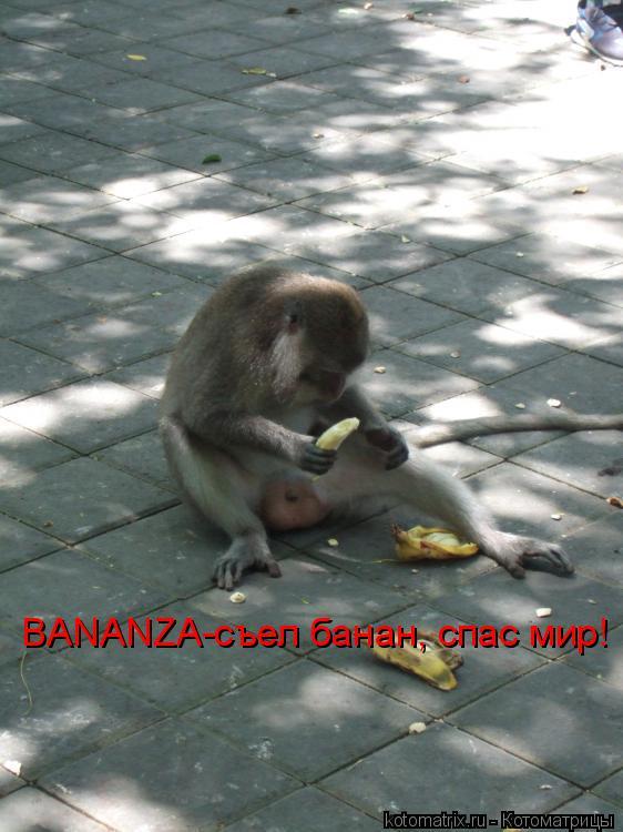 Котоматрица: BANANZA-съел банан, спас мир!