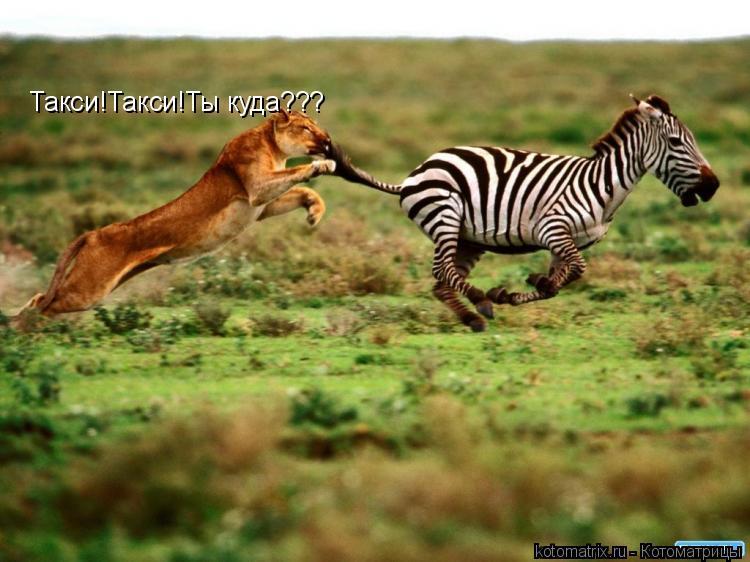 Котоматрица: Такси!Такси!Ты куда???