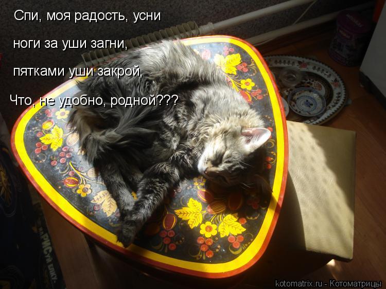 Котоматрица: Спи, моя радость, усни ноги за уши загни, пятками уши закрой, Что, не удобно, родной???
