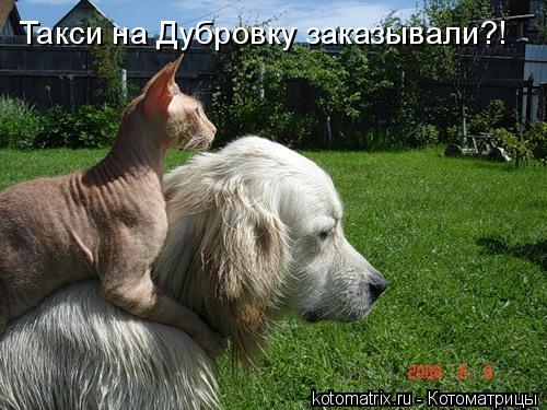 Котоматрица: Такси на Дубровку заказывали?!
