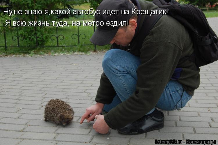 Котоматрица: Ну,не знаю я,какой автобус идет на Крещатик! Я всю жизнь туда, на метро ездил!