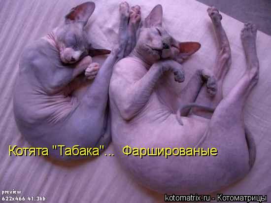 "Котоматрица: Котята ""Табака""...  Фаршированые"