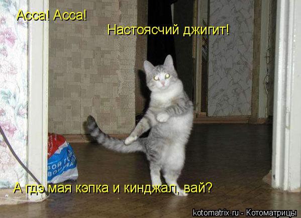 Котоматрица: Асса! Асса! Настоясчий джигит! А гдэ мая кэпка и кинджал, вай?