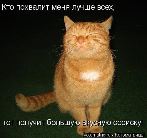 Котоматрица: Кто похвалит меня лучше всех, тот получит большую вкусную сосиску!