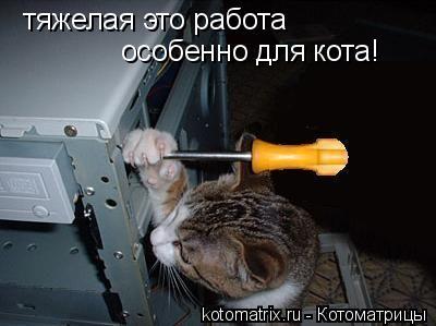 Котоматрица: тяжелая это работа особенно для кота!