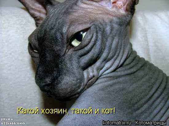 Котоматрица: Какой хозяин, такой и кот!