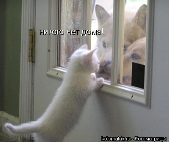 Котоматрица: никого нет дома!