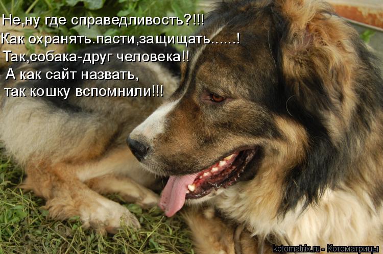 Котоматрица: Не,ну где справедливость?!!! Как охранять.пасти,защищать......! Так,собака-друг человека!! А как сайт назвать, так кошку вспомнили!!!