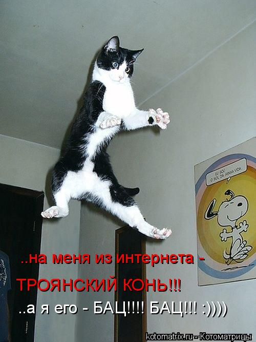 Котоматрица: ..на меня из интернета -  ТРОЯНСКИЙ КОНЬ!!! ..а я его - БАЦ!!!! БАЦ!!! :))))