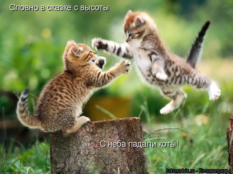 Котоматрица: Словно в сказке с высоты С неба падали коты!
