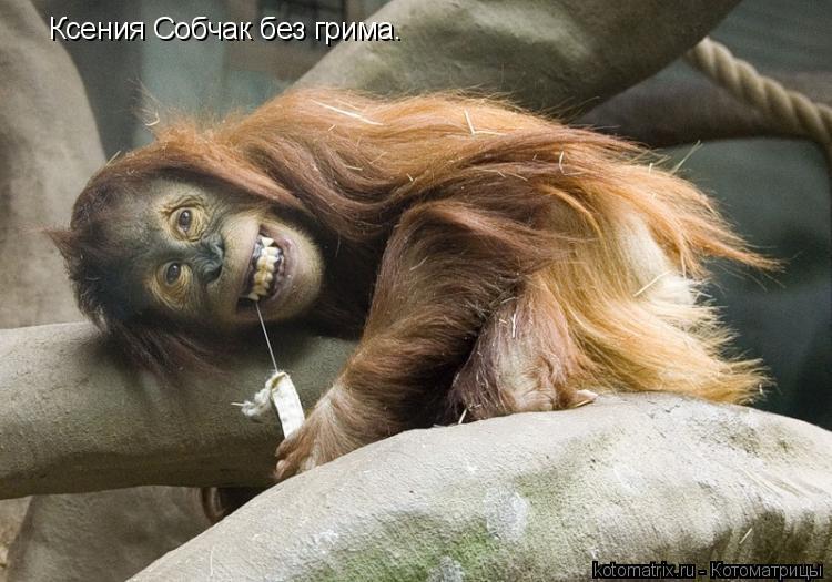 Котоматрица: Ксения Собчак без грима.