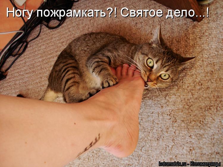 Котоматрица: Ногу пожрамкать?! Святое дело...!