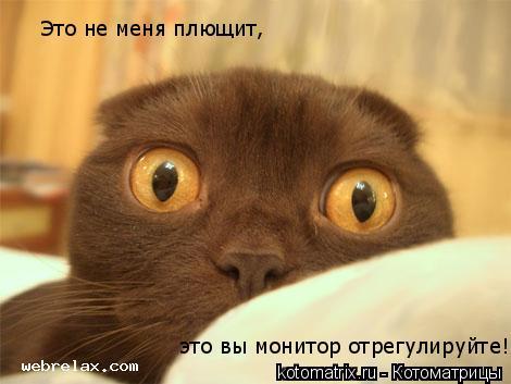 Котоматрица: Это не меня плющит,  это вы монитор отрегулируйте!