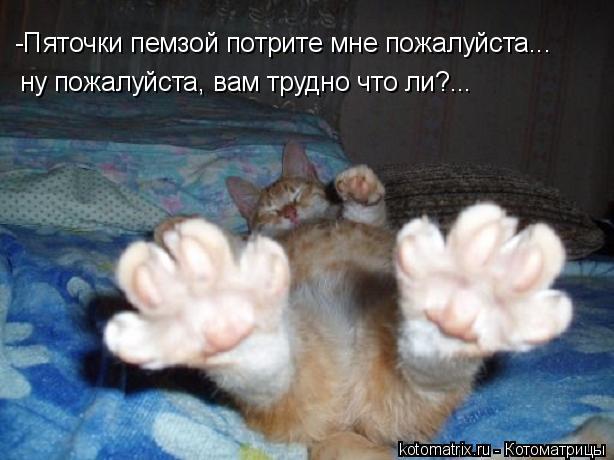 Котоматрица: -Пяточки пемзой потрите мне пожалуйста... ну пожалуйста, вам трудно что ли?...