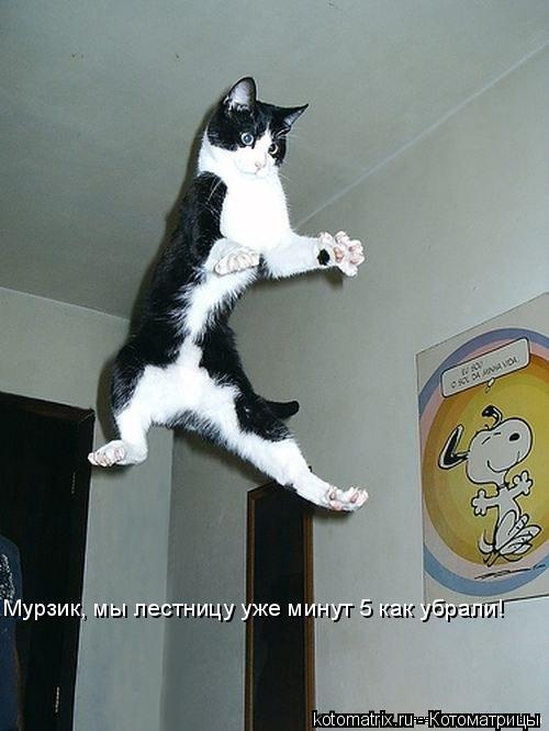 Котоматрица: Мурзик, мы лестницу уже минут 5 как убрали!