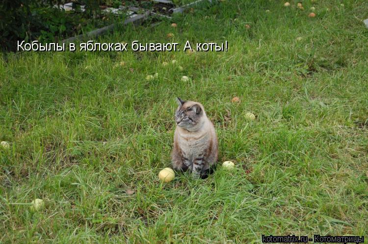 Котоматрица: Кобылы в яблоках бывают. А коты!