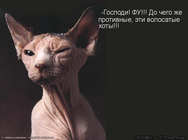 Котоматрица: -Господи! ФУ!!! До чего же  противные, эти волосатые коты!!!