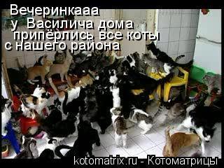 Котоматрица: Вечеринкааа у  Василича дома припёрлись все коты с нашего района
