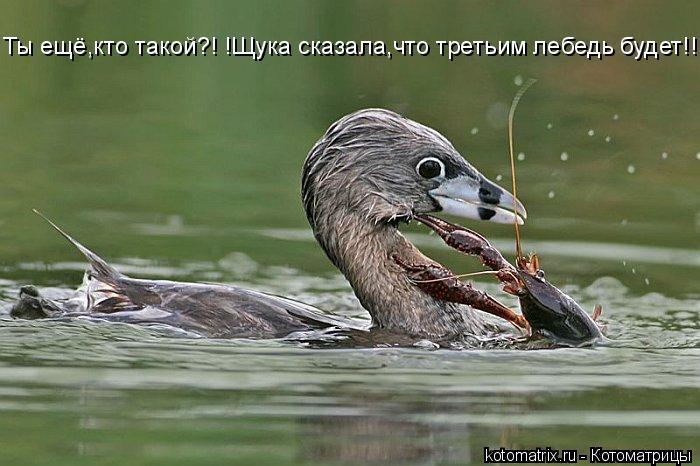 Котоматрица: Ты ещё,кто такой?! !Щука сказала,что третьим лебедь будет!!