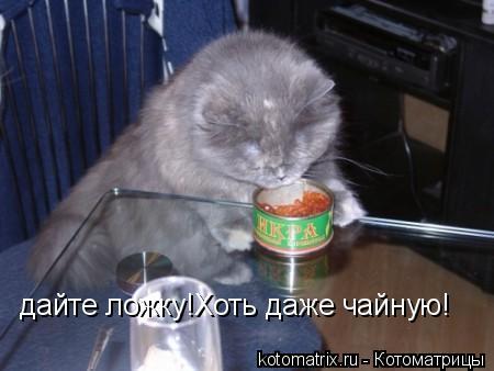 Котоматрица: дайте ложку!Хоть даже чайную!