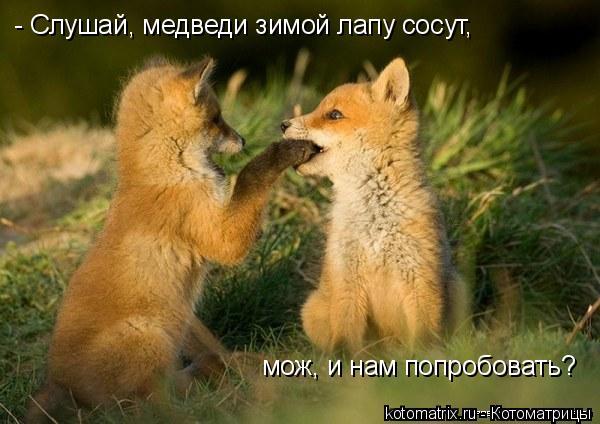 Котоматрица: - Слушай, медведи зимой лапу сосут, мож, и нам попробовать?