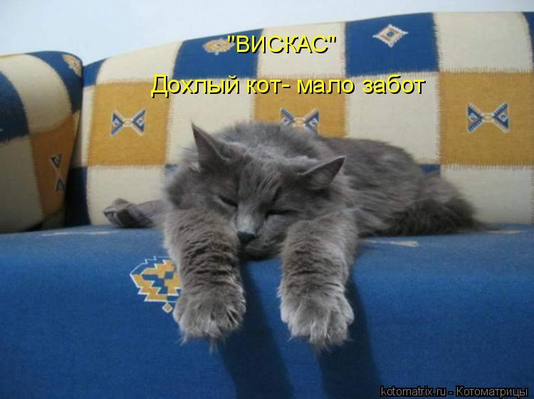 "Котоматрица: Дохлый кот- мало забот ""ВИСКАС"""
