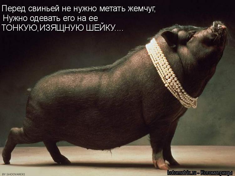 Котоматрица: Перед свиньей не нужно метать жемчуг, Нужно одевать его на ее ТОНКУЮ,ИЗЯЩНУЮ ШЕЙКУ....