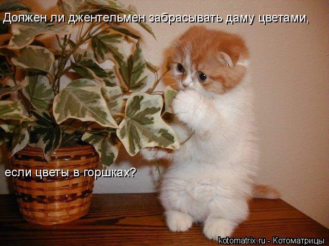 Котоматрица: Должен ли джентельмен забрасывать даму цветами,  если цветы в горшках?