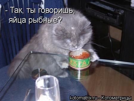 Котоматрица: - Так, ты говоришь, яйца рыбные?