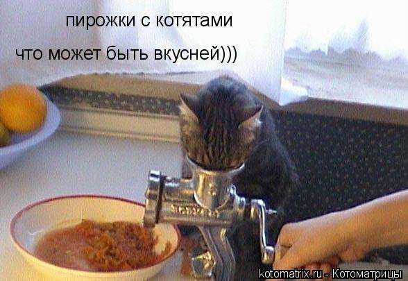 Котоматрица: пирожки с котятами что может быть вкусней)))