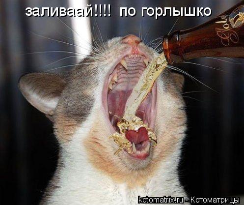 Котоматрица: заливаай!!!! по горлышко