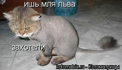 Котоматрица: ишь мля льва  захотели