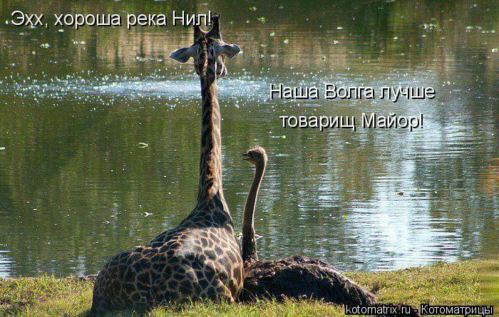 Котоматрица: Эхх, хороша река Нил!   Наша Волга лучше  товарищ Майор!