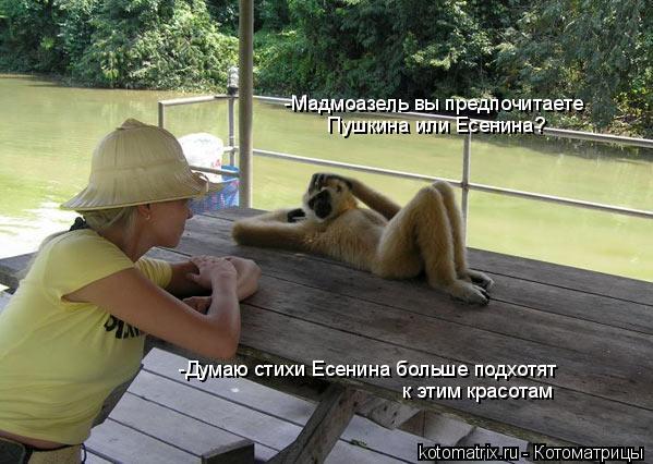 Котоматрица: -Мадмоазель вы предпочитаете  Пушкина или Есенина? -Думаю стихи Есенина больше подхотят  к этим красотам