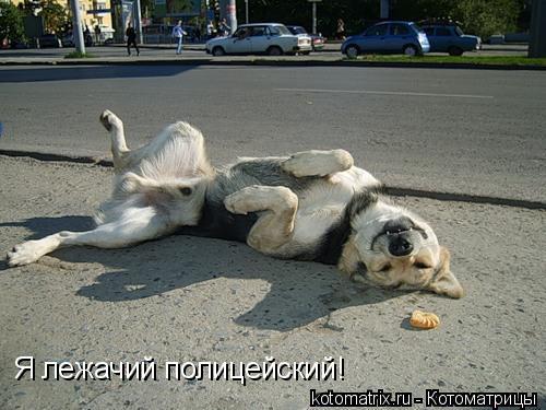 Котоматрица: Я лежачий полицейский!
