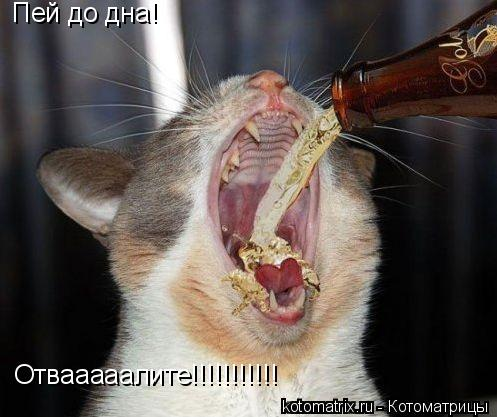 Котоматрица: Пей до дна! Отвааааалите!!!!!!!!!!!