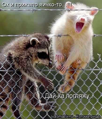 Котоматрица: Дай-ка погляжу... Ох и прижало яичко-то...!!!
