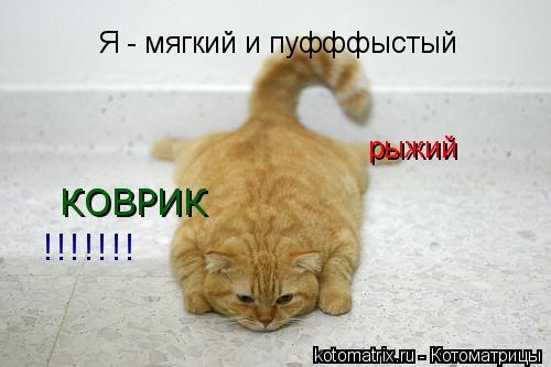 Котоматрица: Я - мягкий и пуфффыстый рыжий КОВРИК !!!!!!!