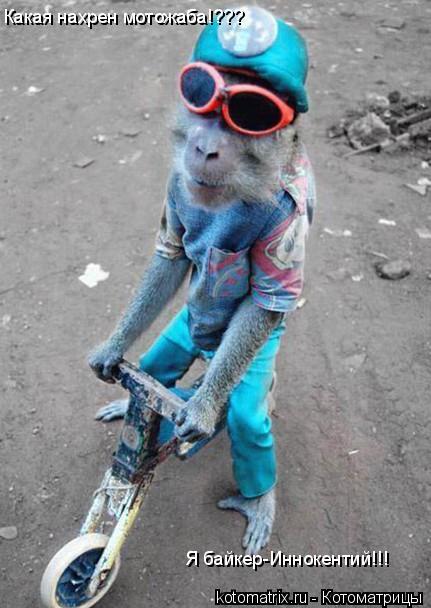 Котоматрица: Какая нахрен мотожаба!??? Я байкер-Иннокентий!!!