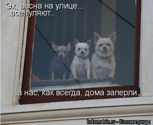 Котоматрица: Эх, весна на улице... ..все гуляют.. ..а нас, как всегда, дома заперли..