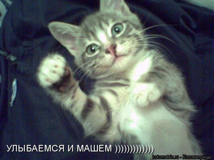 Котоматрица: УЛЫБАЕМСЯ И МАШЕМ )))))))))))))