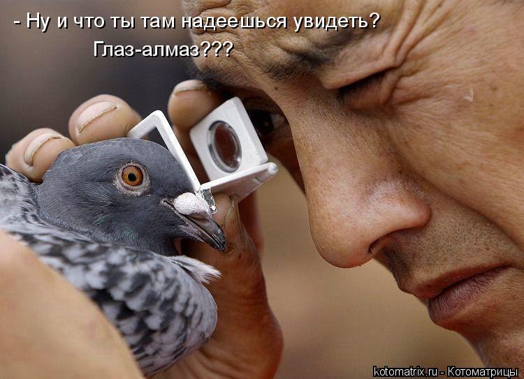Котоматрица: - Ну и что ты там надеешься увидеть? Глаз-алмаз???