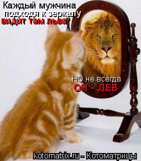 Котоматрица: Каждый мужчина подходя к зеркалу видит там льва НО не всегда ОН - ЛЕВ