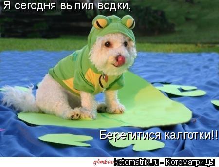 Котоматрица: Я сегодня выпил водки, Берегитися калготки!!!