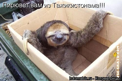 Котоматрица: Пирювет вам из Тажикистонама!!!