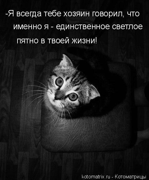 Котоматрица: -Я всегда тебе хозяин говорил, что  именно я - единственное светлое  пятно в твоей жизни!